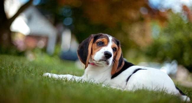 10 Breeds of Dog for Children