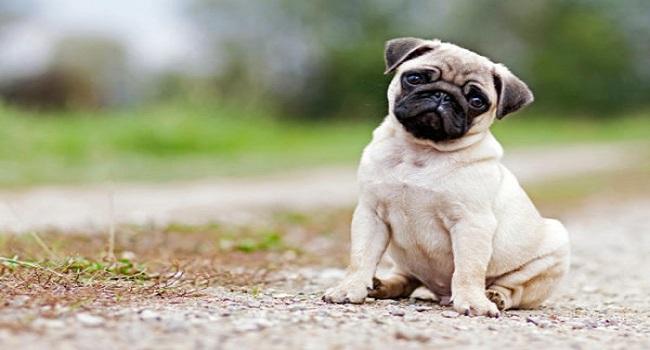 10 Breeds of Dog for Children5