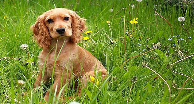 10 Breeds of Dog for Children7