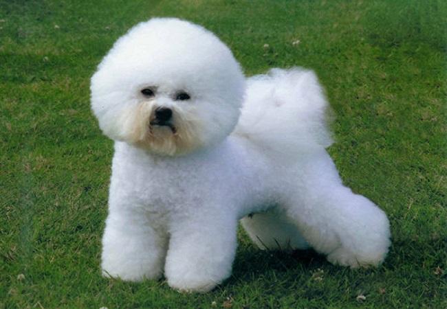 10 Breeds of Dog for Children8