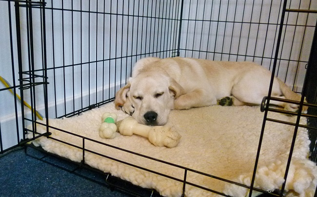 What to Buy Before Bringing a Dog Home1