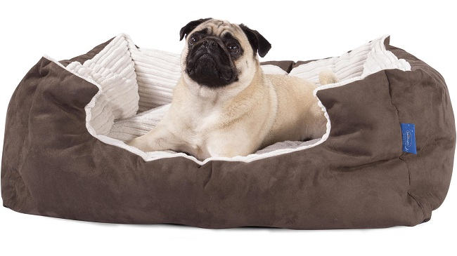 What to Buy Before Bringing a Dog Home3