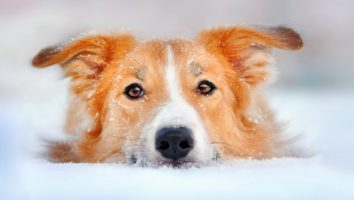 Tips to Protect Your Dog from the Cold