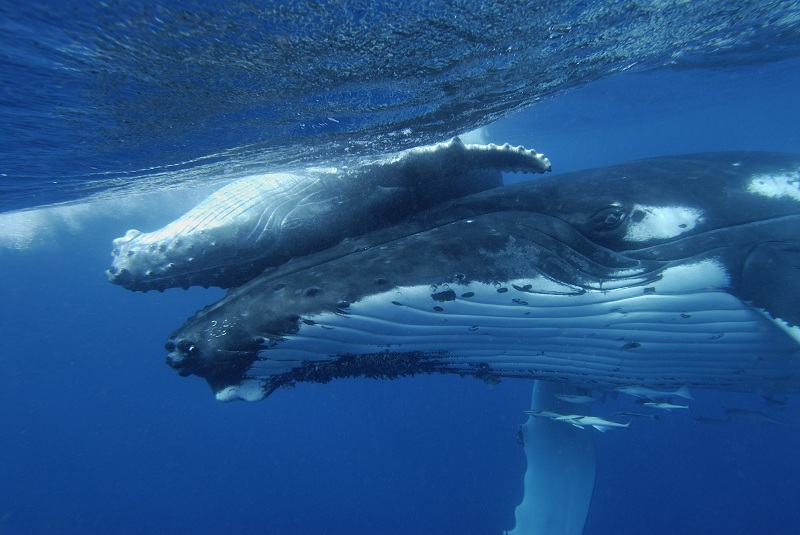 Where to See Whales in Costa Rica?
