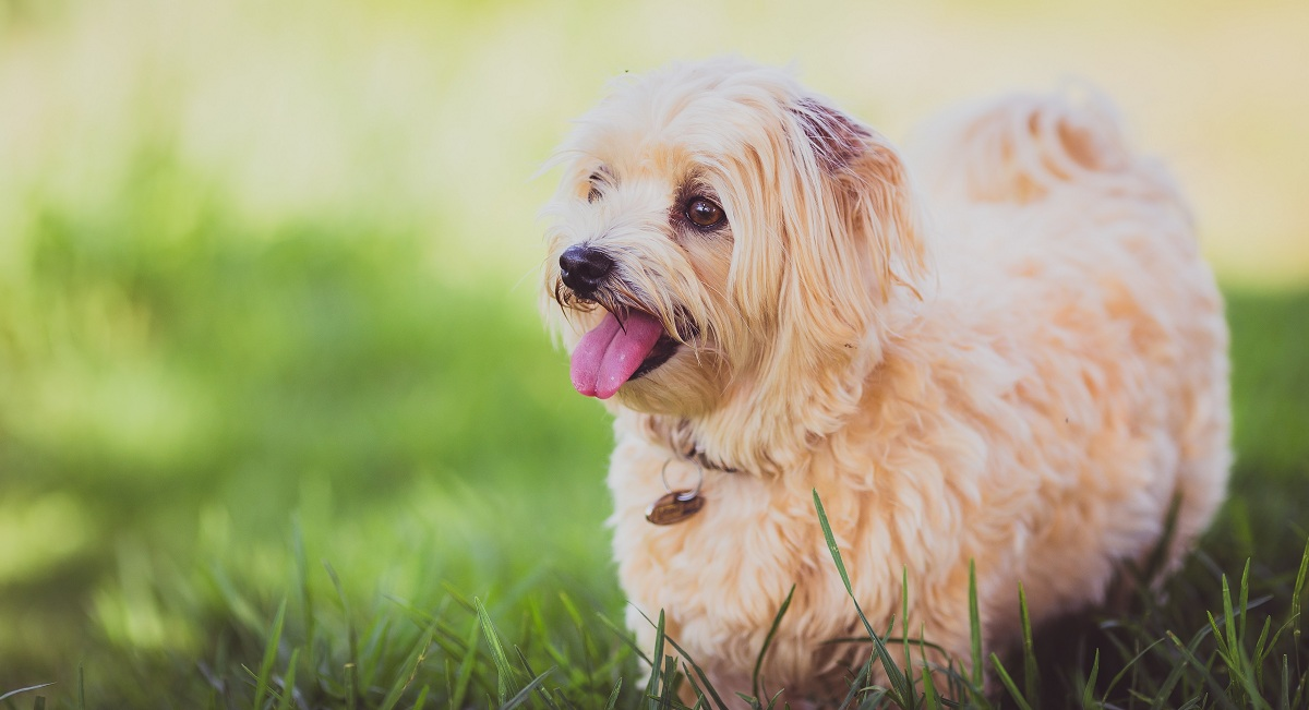 6 tips to make your dog happy