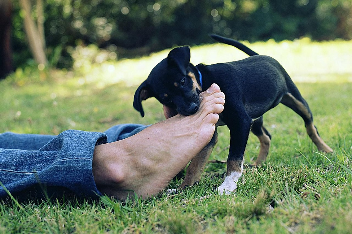 How To Educate A Puppy Dog?