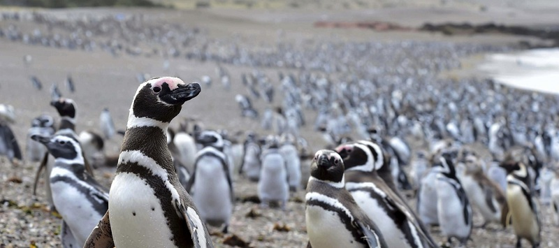 Where To See Penguins In Patagonia